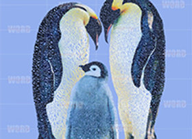 Emperor Penguin Giclée Canvas 30x40
