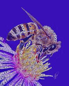 Honeybee2-.jpg