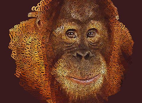 Orangutan Giclée Canvas 30x40