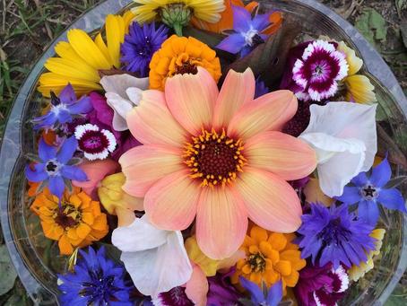 Så var årets blomstersesong over...