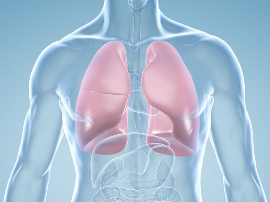 lungen anatomische illustration