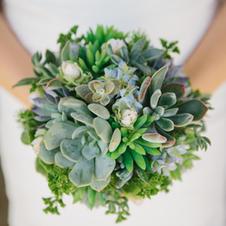 Live Succulents