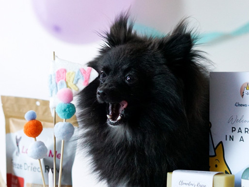 Is it weird to have a birthday party for your dog?