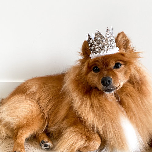 Barkday Crowns for Kings and Queens