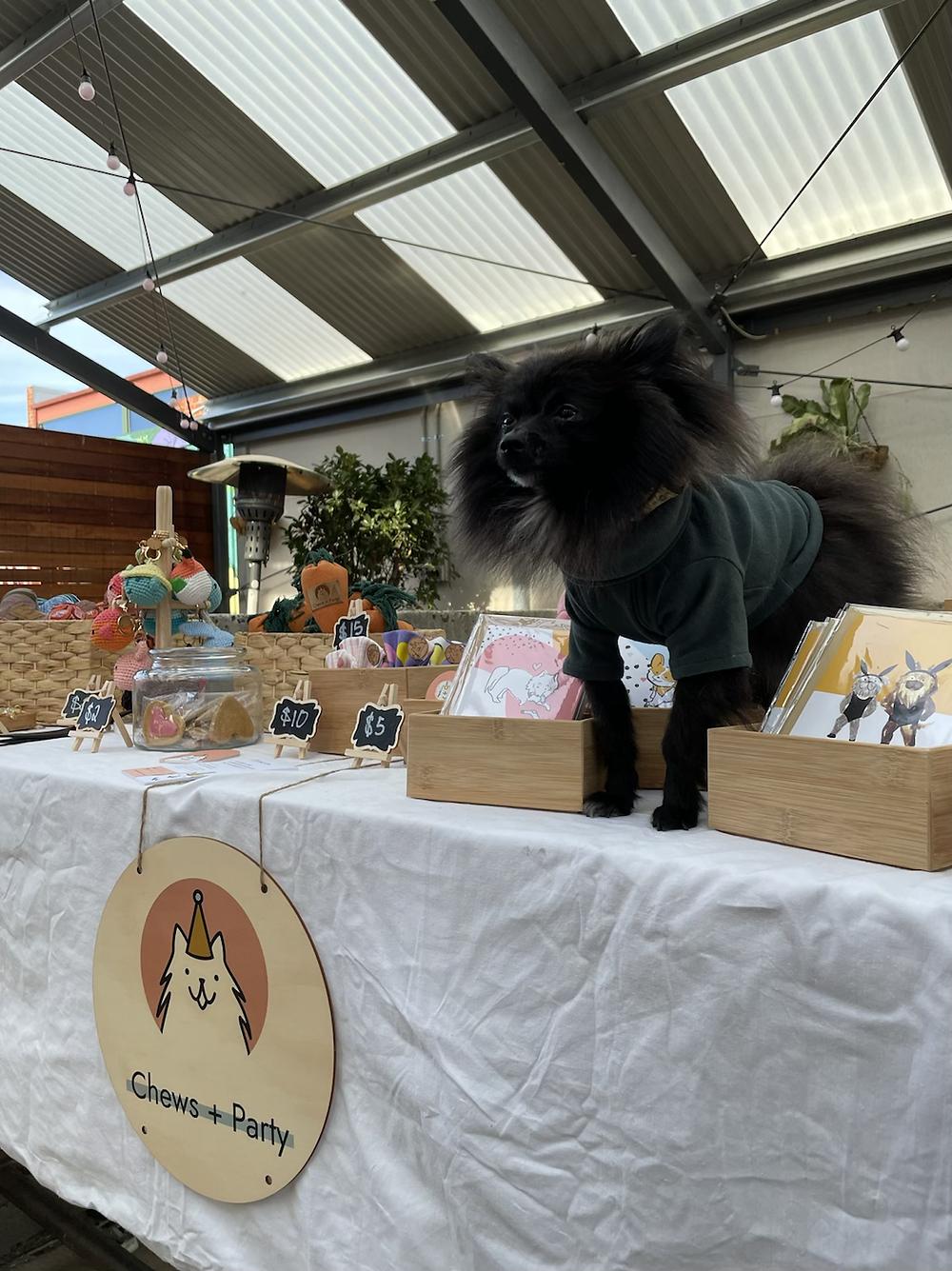 Fluffy Theo pom at dog market