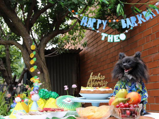 What to do for your dog's barkday!