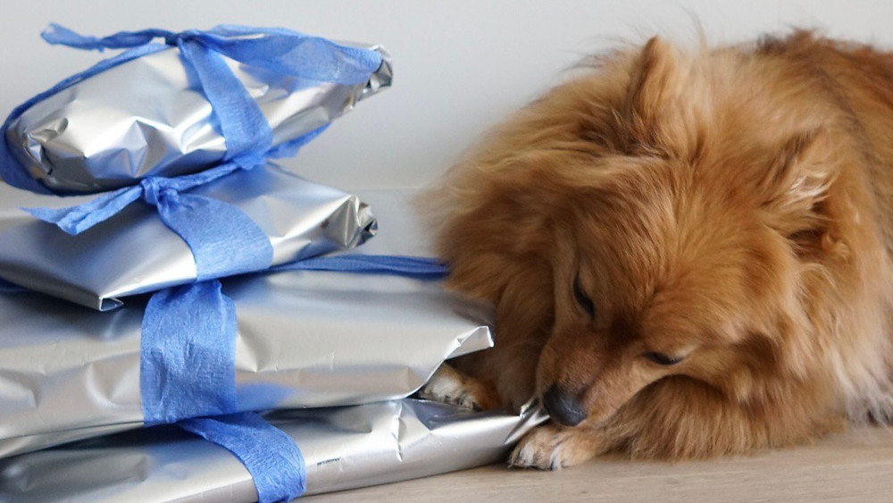 Dog with heaps of presents