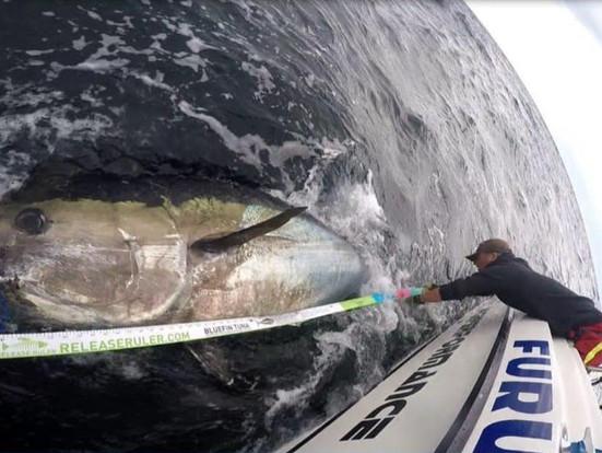 Kurs i stangfiske etter makrellstørje