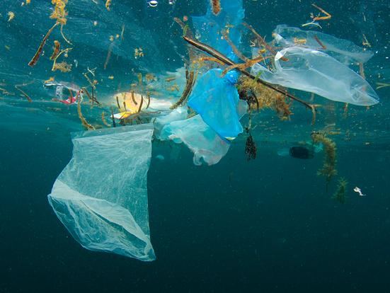 Plast i havet - Støtt årets TV-aksjon