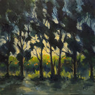Orchard behind a cypress trees curtain