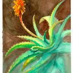 Aloe Vera, Detail