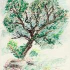 אלון ביער