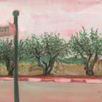 שרשרת עצי זית ברחוב הדפנה