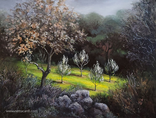 Olive Nursery in a Dark Forest
