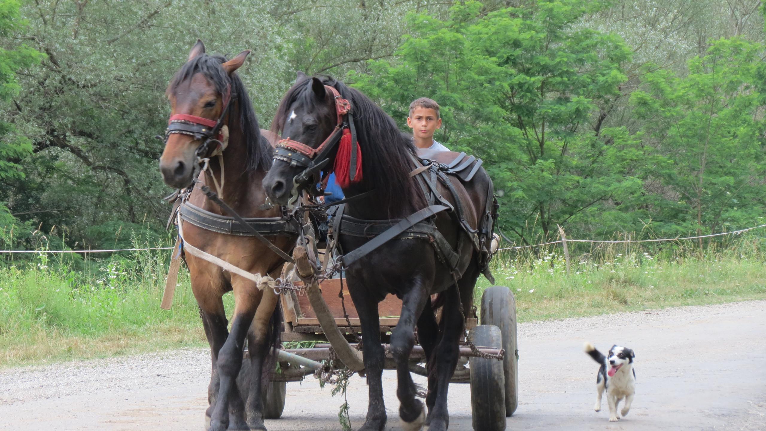 052_-_On_the_road_near_Copșa_Mare