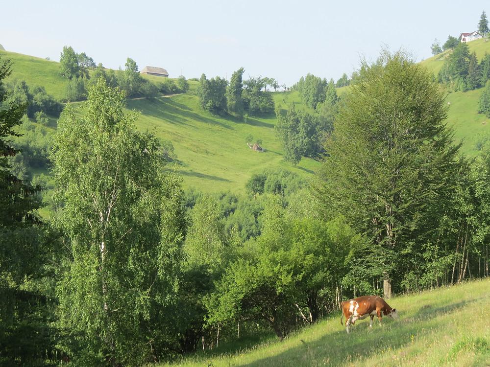 Magura, Transylvania, Romania, Eastern Europe