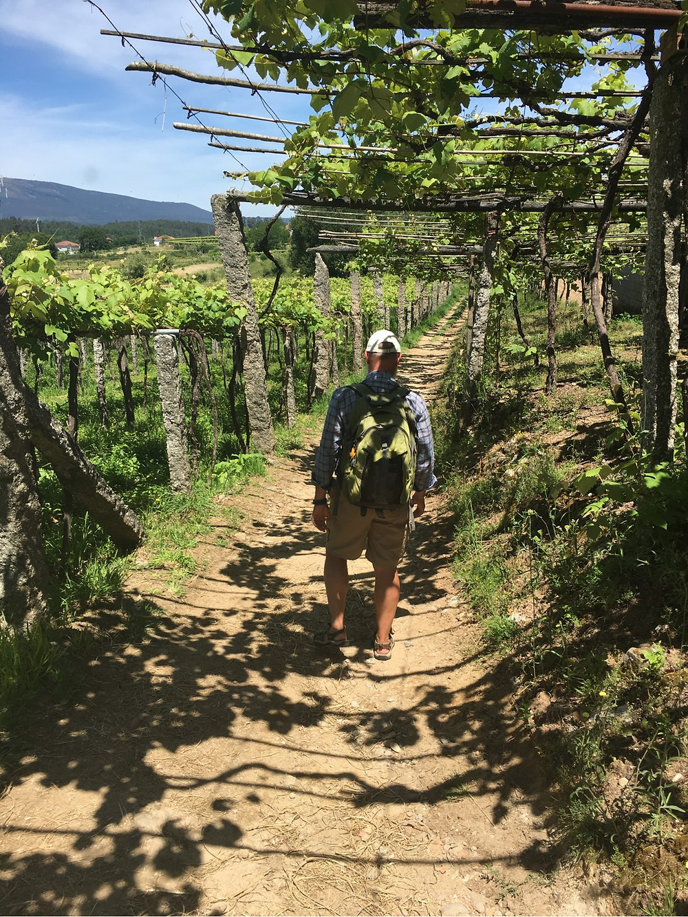 On the Portuguese Camino you hike through vineyards