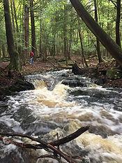 Barnum Creek.jpg
