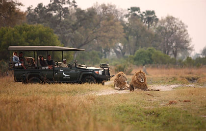 Experience a taste of the best Zimbabwe and Botswana has to offer, on this grand 8-day itinerary. Explore the thundering majesty of the famed Victoria Falls in Zimbabwe, ending with the most remote and untouched wildlife areas in Botswana. Your adventure begins with the sight of the magnificent flume of water vapour that hangs above the mighty Victoria Falls. The next stop is the famed Chobe National Park where elephant wander dreamily into camp, and hippo slumber as you float down the river on a sunset cruise. Your journey culminates in the Okavango Delta, a magical setting where land blurs with water. Be captivated by a maze of sparkling lagoons, meandering channels and overgrown islands teeming with wildlife. A sensational experience! As with all our private tours, this sample itinerary can be completely tailored to create the perfect journey of discovery for you.