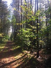 Dahl Forest.jpg