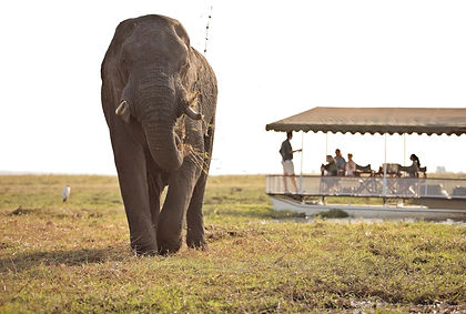 A taste of the best Botswana has to offer, this grand itinerary explores the most remote and untouched wildlife areas in Botswana, ending with the thundering majesty of the famed Victoria Falls in Zimbabwe. A magical setting where land blurs with water, the first destination is the Okavango Delta. The next stop is Moremi Game Reserve, where the long necks of a family of giraffe materialise slowly out of the skyline and graceful sitatunga hide in the reeds. The secluded Selinda offers the opportunity to feel the Africa earth beneath your feet as you discover the marvel of the bush on guided safari walks. In the famed Chobe National Park elephant wander dreamily into camp and hippo slumber as you float down the river on a sunset cruise. The adventure ends within sight of the magnificent flume of water vapour that hangs above the mighty Victoria Falls. As with all our private tours, this sample itinerary can be completely tailored to create the perfect journey of discovery for you.