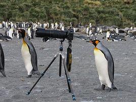 Penguin and camera.JPG