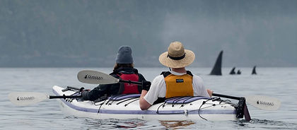 Johnstone Strait, separating Canada's Vancouver Island from British Columbia's mainland, is recognized as one of the best places in the world to kayak with orcas.  This fantastic kayak adventure may also have you encounter black bear, bald eagle, seals and sea lions, dolphins, and occasionally even other whale species.