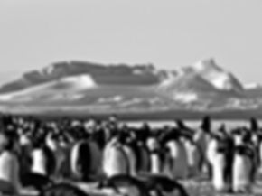 travel to Antarctica is but one of the highlights of travel to the polar regions by expedition cruise.  Others include the Falklands, South Georgia, emperor penguins, Weddell Sea, Elephant Island, South Shetland Islands, The Antarctic Peninsula, Ross Sea, Snow Hill Island