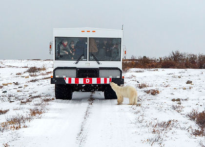 Come eye to eye with polar bear on this adventure in Churchill, Manitoba, Canada.  Enjoy two expeditions into the Churchill Wildlife Management Area aboard a purpose-built Arctic Crawler™, along with a cultural and heritage tour and dog mushing.  This is the ultimate northern experience!