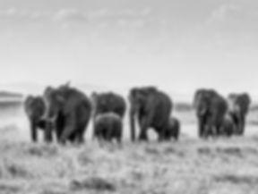 Safari in Masai Mara, Kenya, Africa