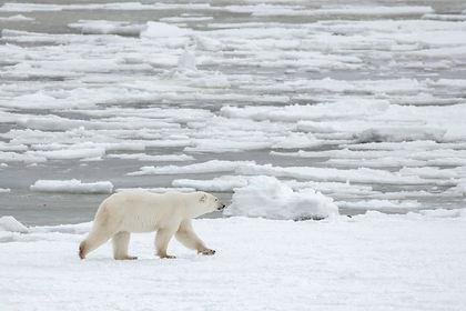 Canada, Canadian Arctic, MB, SK