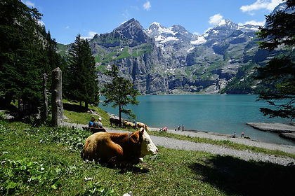 Beneath the peaks of Jungfrau, Eiger and Monch, in Switzerland's Bernese Oberland, are some of the Swiss Alps most scenic hiking trails.  Based in Kandersteg we hike the best of them, using cable cars to get us at altitude, and walk among towering cliffs and soaring peaks, glacial valleys and flower-strewn alpine meadows.