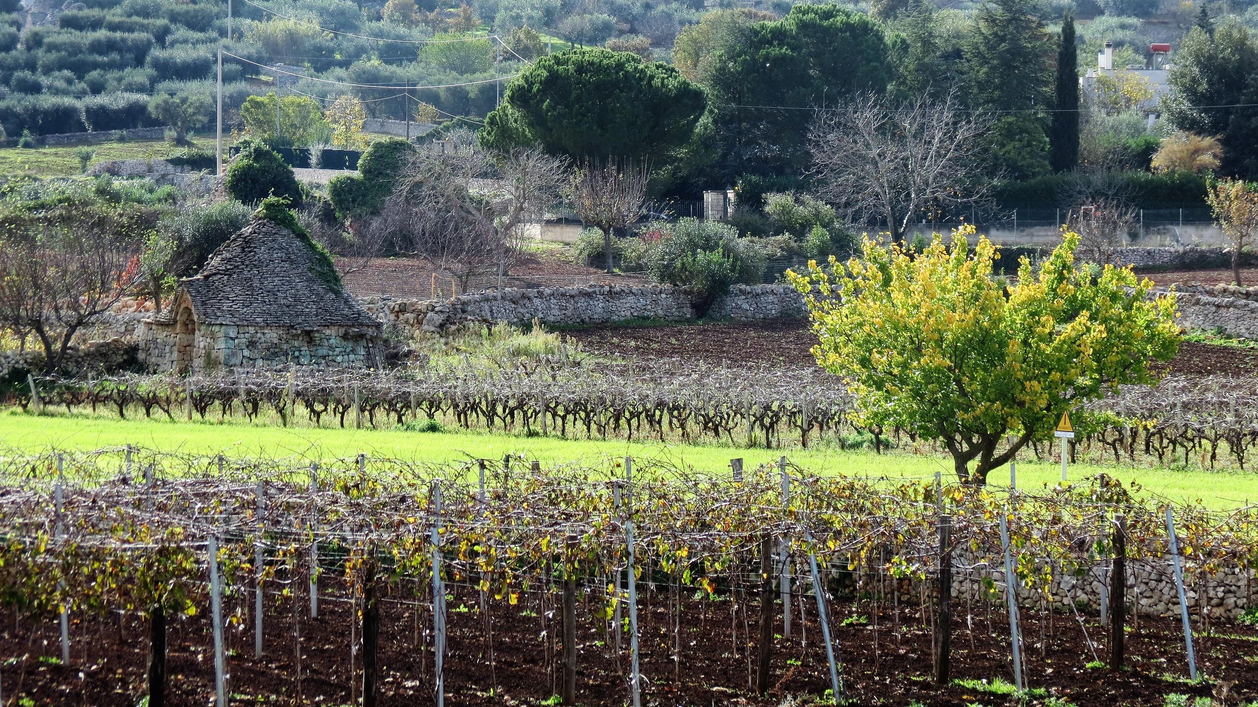 Countryside near Locorotondo, Puglia