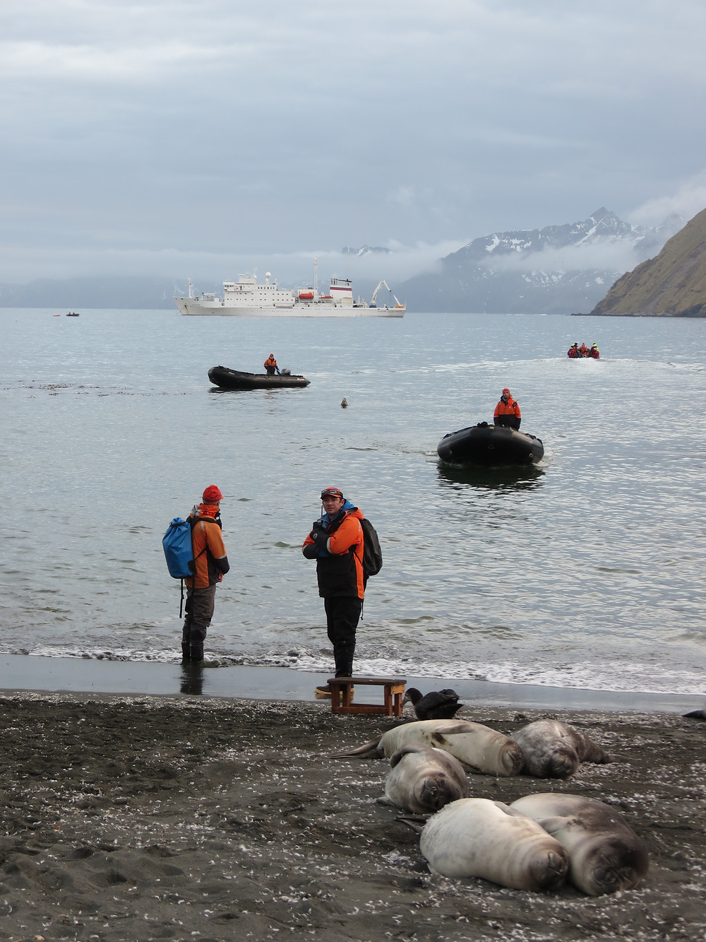 Zodiacs landing in Gold Harbour, South Georgia, Antarctica