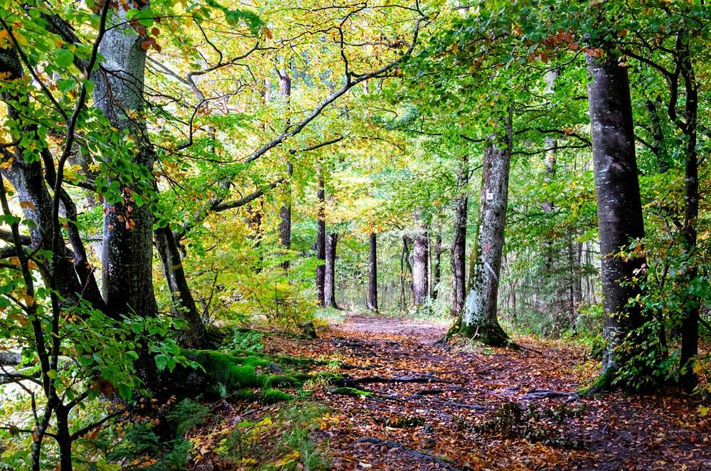 Waldweg auf der Schwäbischen Alb