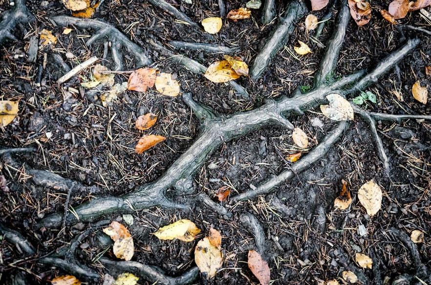 Herbstwurzel