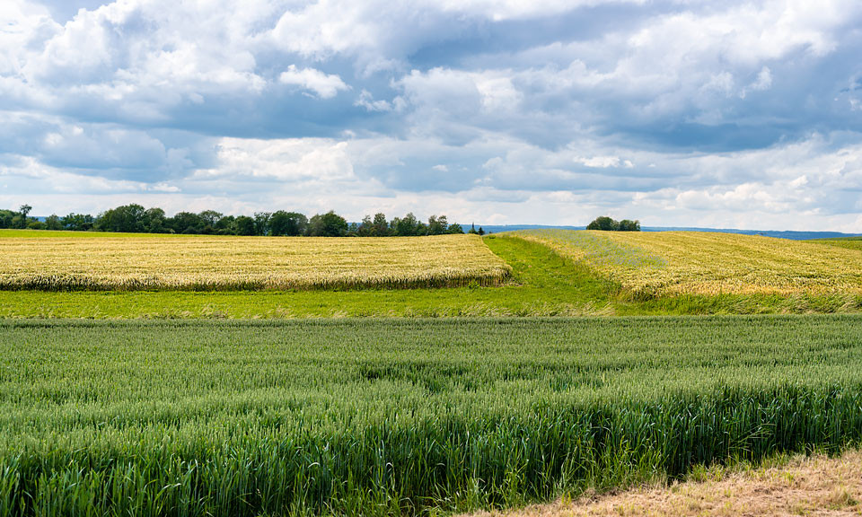 Landschaft mit Ertinger Kirchturmspitze