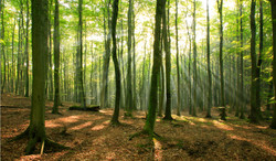 treesroisite