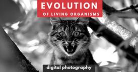 evolução + fotografia.png