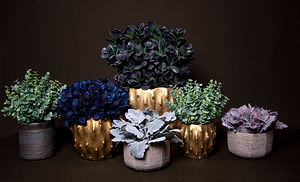 6 Vase Collection.jpg
