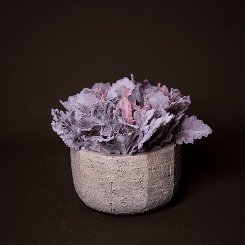 Mauve Dusty Miller in grey stone bowl