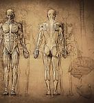 Anatomy+Drawing.webp