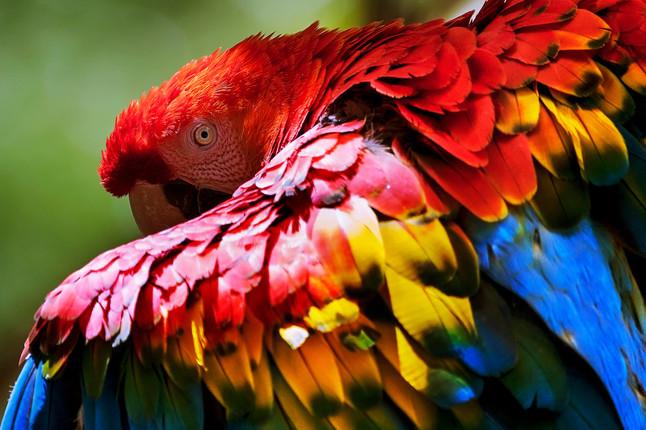Últimos Refúgios recomenda: programe suas férias usando nosso guia de observação de aves.