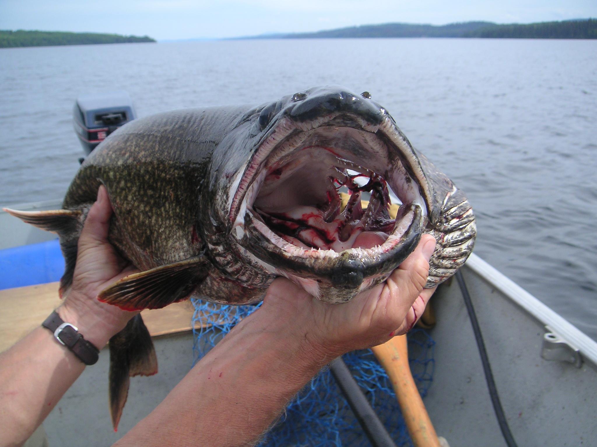 Angeln - Frischer Fisch