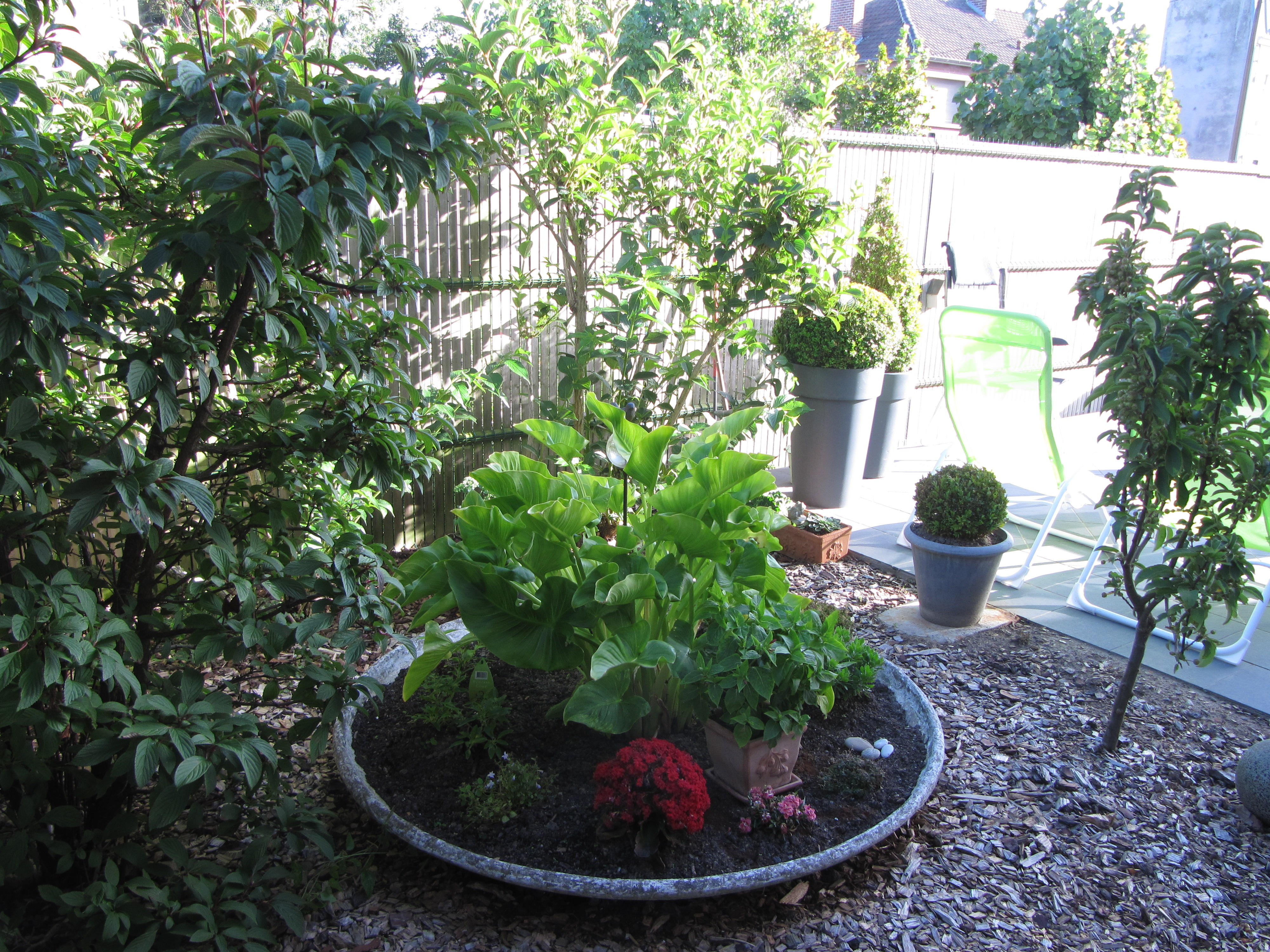 Le jardin et sa végétation