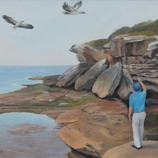 1805 Sea Eagles at  Malabar Headland.sol