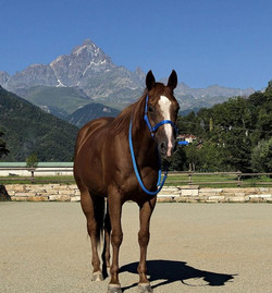cavalli-francesca