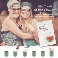 Fb post Flower power 22_03.jpg