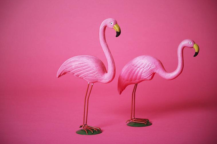 flamingo-collab.jpg