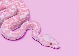 pink-snake-background.jpg